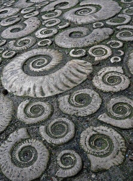 ¡ammonites en la playa matemolivares
